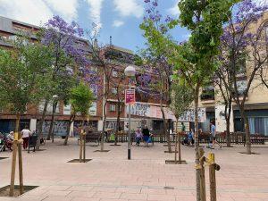 Jacaranda trees Barcelona's Placa de John Lennon