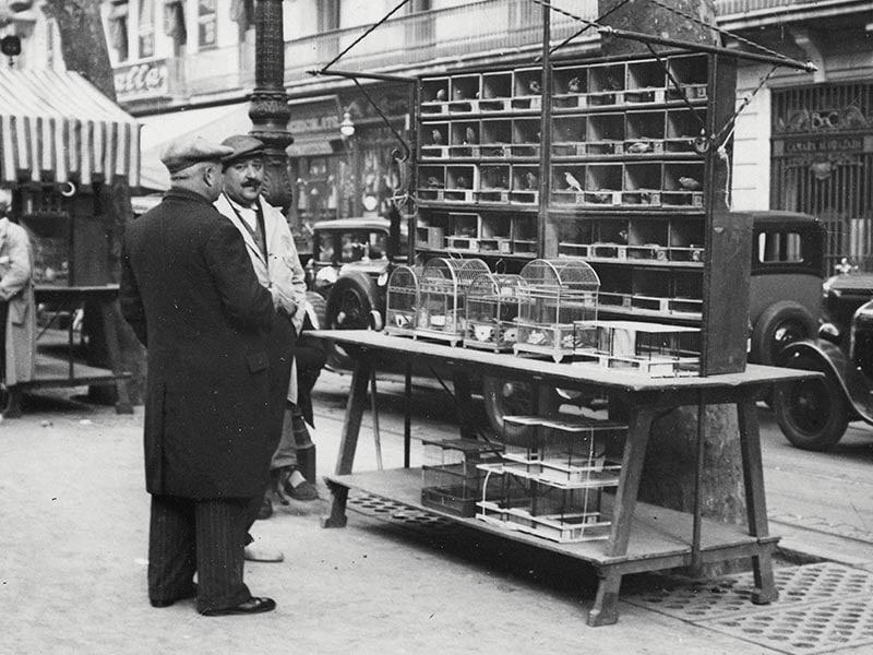 1933 - Bird Seller on Les Rambles.